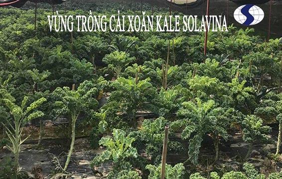 svn-vung-trong-cai-kale-2